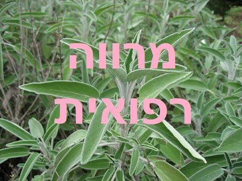 מרווה רפואית - Salvia איכותית וארומתית(453גר')